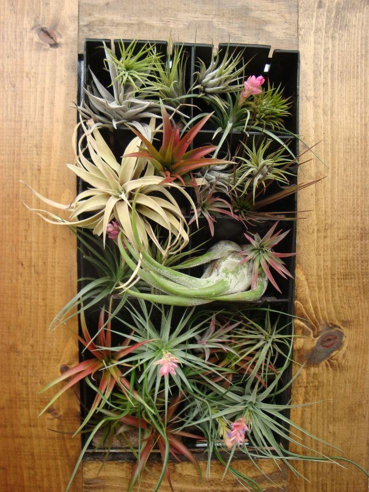 Hanging Plant Diy Living Walls