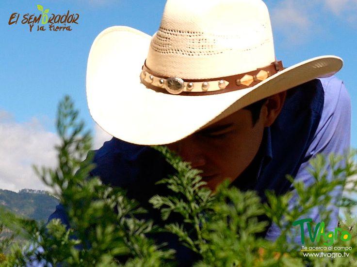 El Sembrador y La Tierra desde Honduras:Conservación del Suelo.