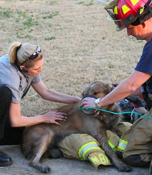 Georgia firefighter administers oxygen to one of two dogs rescued from burning home   Shared by LION