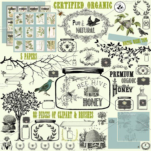 Certified Organic Clipart & Brushes by Le Paper Cafe on @creativemarket