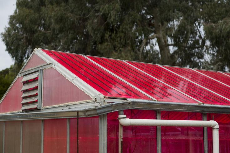 Magenta greenhouse glass generates electricity, doesn't bug plants