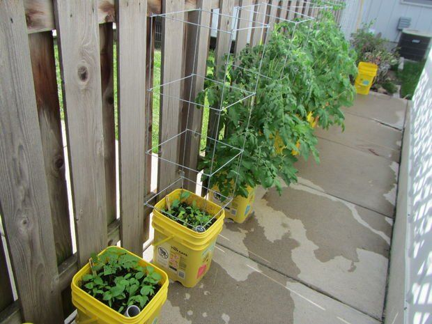 Self-watering container garden