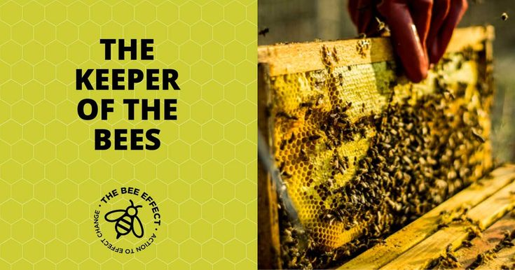 Keeper of the Bees   #BeeEffect, #Beekeepers, #Bees, #Honey, #HoneyBees, #TheBeeEffect