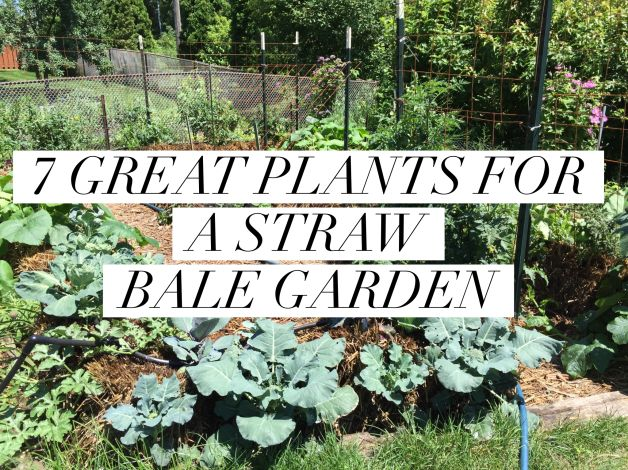 1000 Images About Straw Bale Gardening On Pinterest 400 x 300