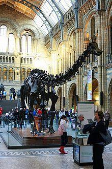 Muzeum Historii Naturalnej w Londynie – Wikipedia, wolna encyklopedia