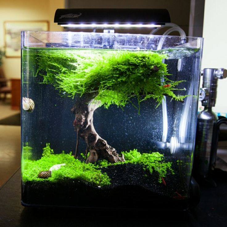25 Best Ideas About Nano Aquarium On Pinterest Betta Tank Betta Aquarium And Aquarium Set