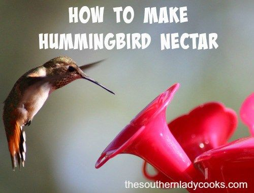 Hummingbird Nectar 1 cup white granulated sugar 4 cups water Bring to boil on top of the stove. Boil 1 minute. Remove and let cool.