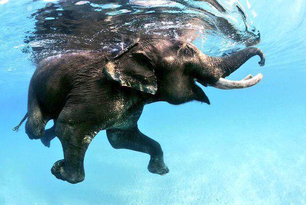 casually taking a swim ✌