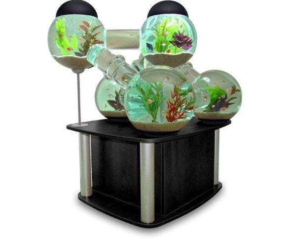 Acquario Silverfish