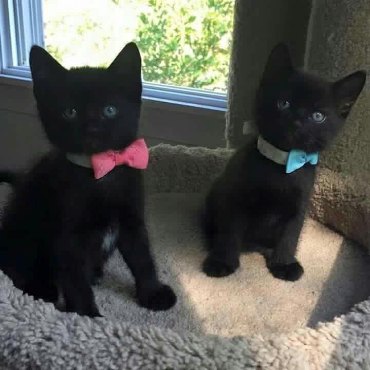 Cute black kittens!
