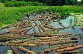 Spływ drewna.