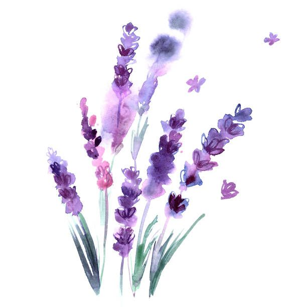 Watercolor Hand Painted Lavender Flowers On White Background Vector Art Illustrati Watercolor Flowers Paintings Watercolor Printable Art Watercolor Art Prints