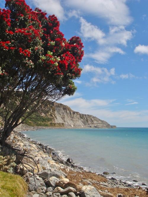Cape Palliser, Wairarapa, New Zealand