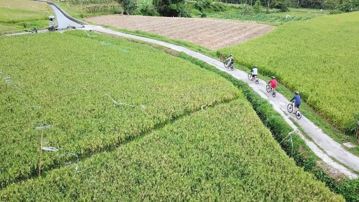 Cycling in Bali around rice terraces and the village of Mambal on ebike.