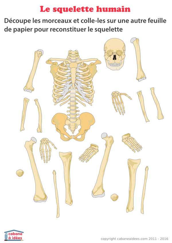 Utilisez cette fiche pour apprendre la composition du corps humain. Il s'agit de découper les différents morceaux du squelette et de les coller sur une autre feuille, pour reconstruire le squelette humain. Retrouvez les 2 autres fiches à télécharger sur le même sujet : ce sont des schémas de squelette avec et sans libellés.