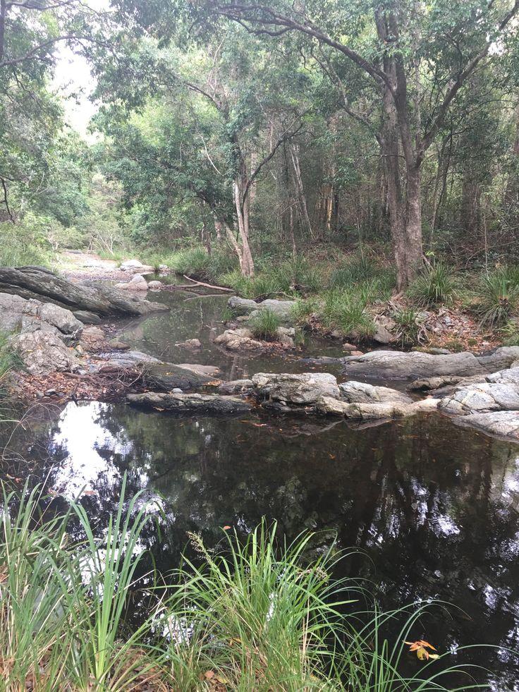 Bush Walk #1 Enoggera Reservoir, Started off from Walk About Creek, The Gap. 24.1.16