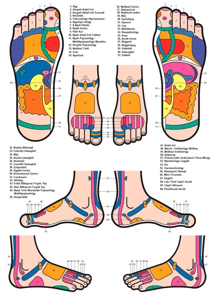 Reflaxológiai lábtérkép, reflexpontok, láb, talp