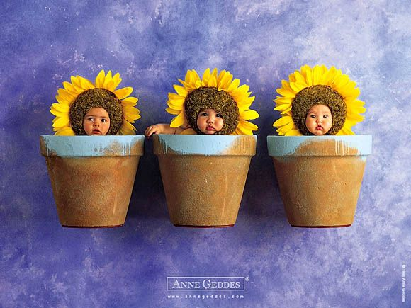 My FAVE Anne Geddes Print, I LOVE babies and I LOVE Sunflowers, go figure!