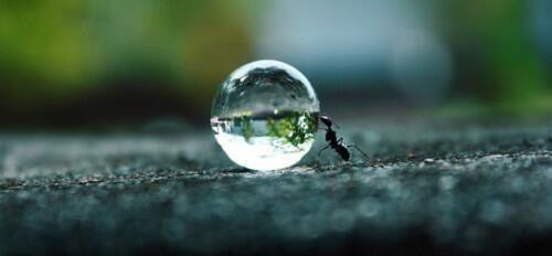 Hormiga esforzada