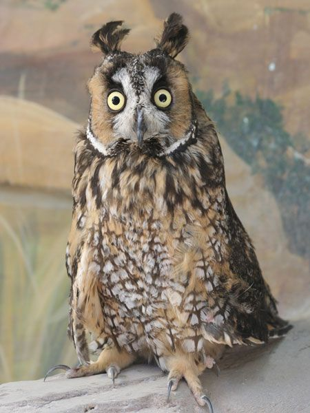 images of owls - Google Search
