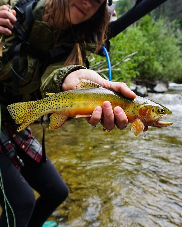 1000 images about trout fishing on pinterest green for Green top hunting and fishing