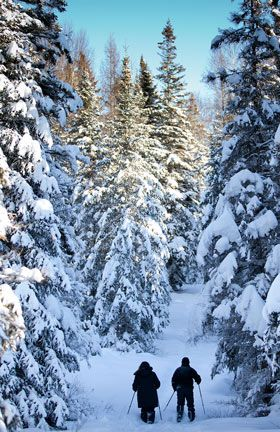 Snowshoeing in the forest at Fern Glen Inn> Close to Arrowhead Park and Algonquin Park but most important...only a short picturesque drive to the Kearney Dog led Races!