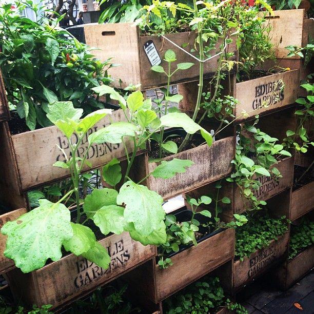 Rustic edible vertical garden  #outdoors