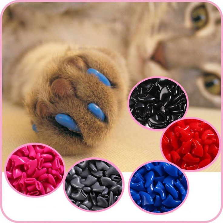 100pcs/5sets - Cat Nail Caps With Adhesive Glue //Price: $9.95 & FREE Shipping //     #kitty