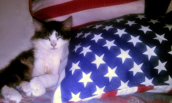bedtime cat, meow.