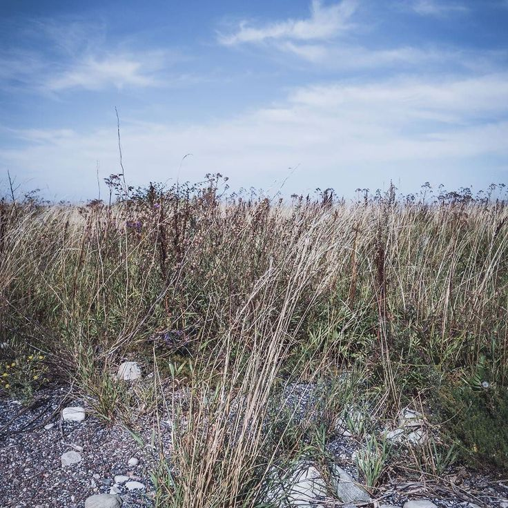 Run lonely through the grasses and just switch off! #worldprime #ournaturedays #bns_nature #naturewhisperers #fotofanatics_nature_  #splendid_shotz #globalcapture #worlds_beautiful_photos  #bns_earth #pocket_allnature #earth_shotz #shotz_times #splendid_shotz  #nature_brilliance #moody_nature #nature_wizards #nature_perfection #naturehippys_ #naturelover_gr  #fiftyshades_of_nature_ #photoarena_nature #moodygrams #vzcomood #passionpassport #exploringtheglobe  #worldtravelpics  #ig_europe…