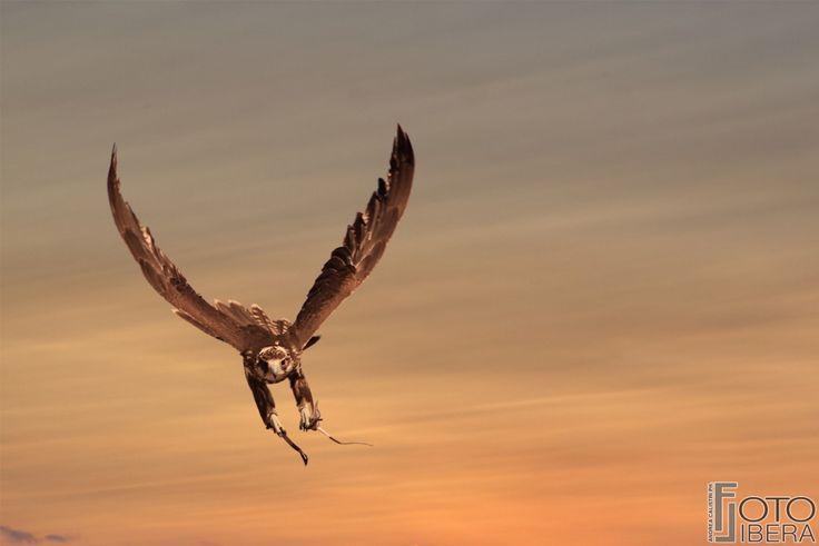 """DAY 42 """"Il Falco volava..."""" 17/11/2015 #365project"""