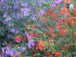 Image result for perennial beds using australian native plants
