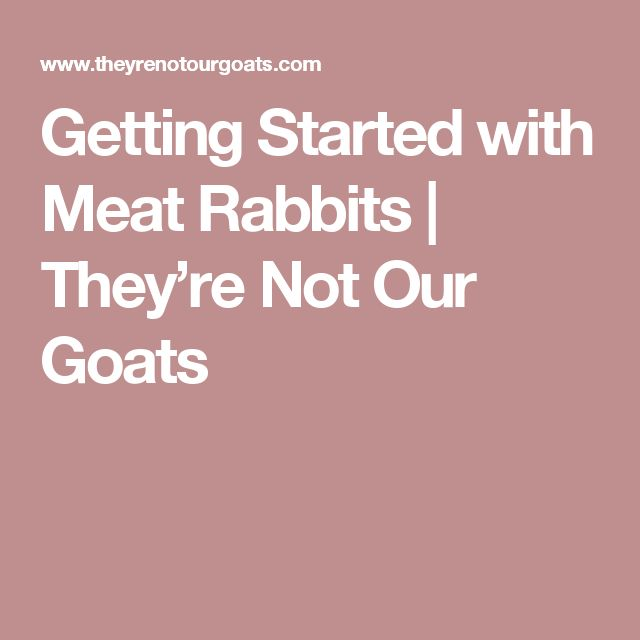 Getting Started with Meat Rabbits | They're Not Our Goats