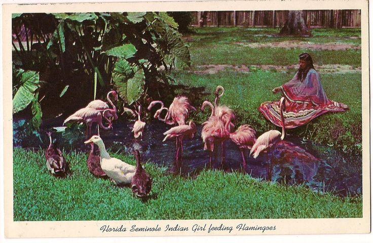 Seminole Girl Feeding Flamingos Florida Postcard