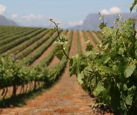 Franschhoek: a little piece of France nestled between the mountains of South Africa. Cheers!