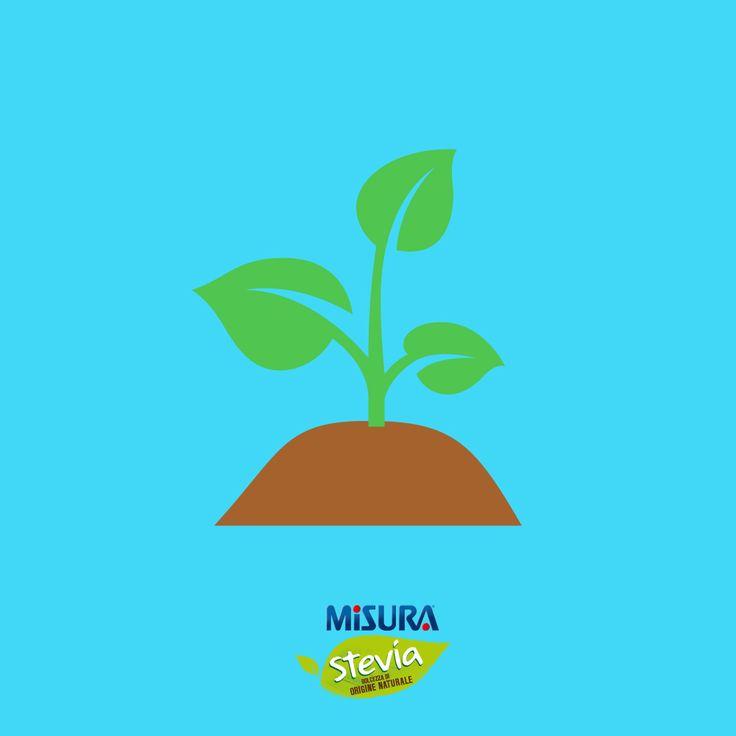 La coltivazione di #stevia ha un #impattoambientale inferiore del 55% rispetto alla barbabietola da zucchero.