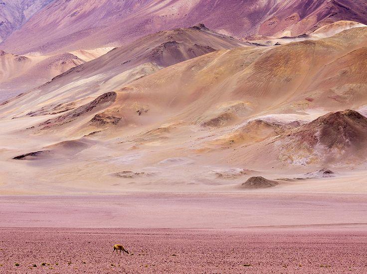 Atacama Desert, Chile Photograph by Peter Groenendijk, Corbis