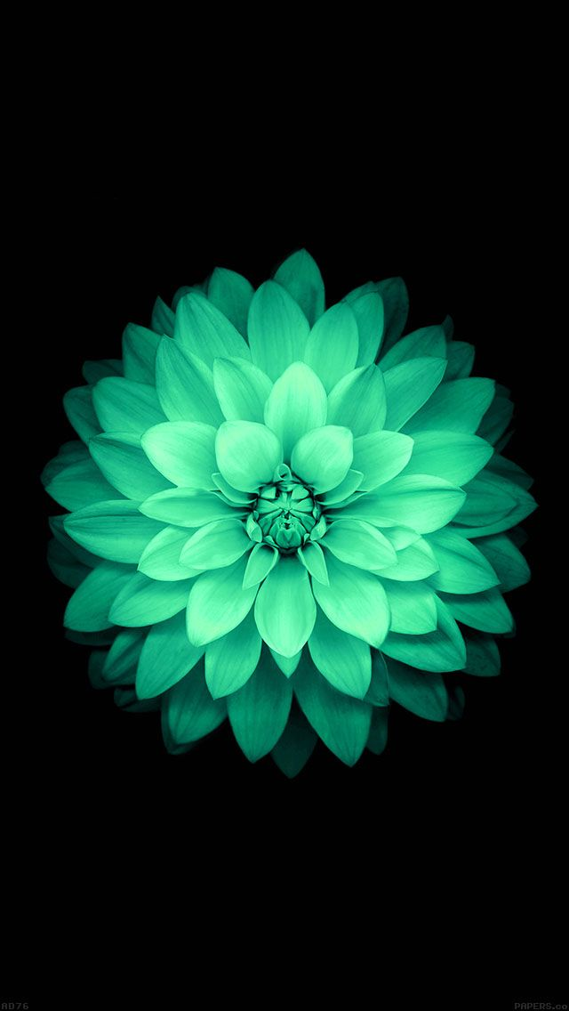 freeios8.com - ad76-apple-green-lotus-iphone6-plus-ios8-flower - http://goo.gl/Ip4kqp - iPhone, iPad, iOS8, Parallax wallpapers