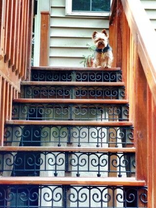 We added inexpensive plastic fencing to our steps going up our deck.  Our dogs were afraid of the open stairs.   Now they love it...and so do we.  Good way to give your steps a custom look for under $75.