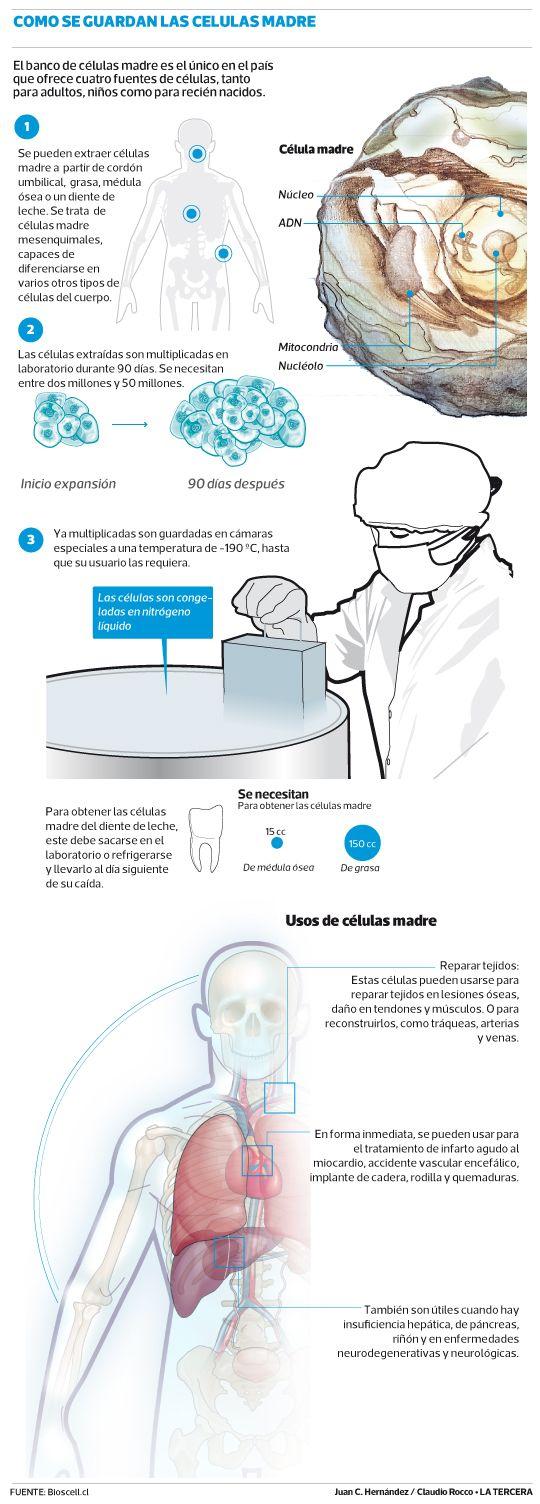 Inauguran en #Chile primer banco de células madre para adultos.  Junio 2013
