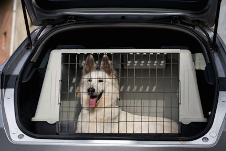wie funktioniert Hundetransportbox