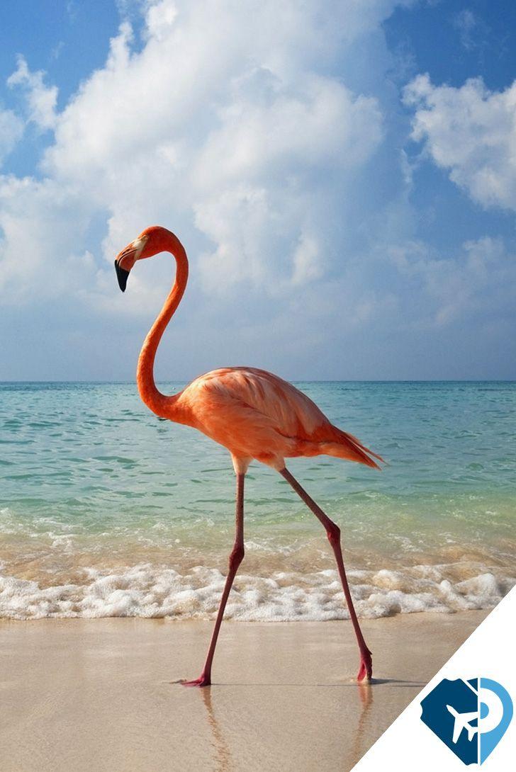 Bayahibe, República Dominicana. Tiene un paisaje de postal, con su arena blanca, agua cristalina, palmeras, y barcos de madera de colores flotando por todos lados. Encontrarás una gran variedad de excursiones de buceo, desde buceo en cuevas y con tiburones, hasta una exploración de los ecosistemas de arrecifes de coral frente a la isla Catalina.