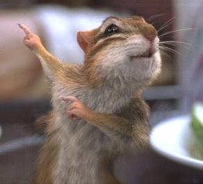 21 Chubby Chipmunk Cheeks | Chipmunks, Animal and Squirrel