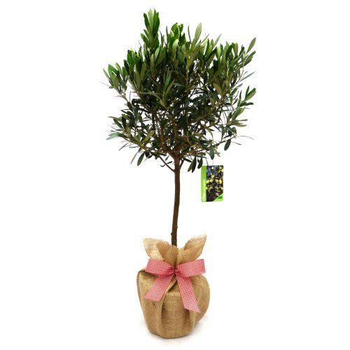 117 best gift ideas for men images on pinterest for Indoor plant gift ideas