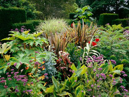 27 Best Images About Garden - Phormium On Pinterest | Shade