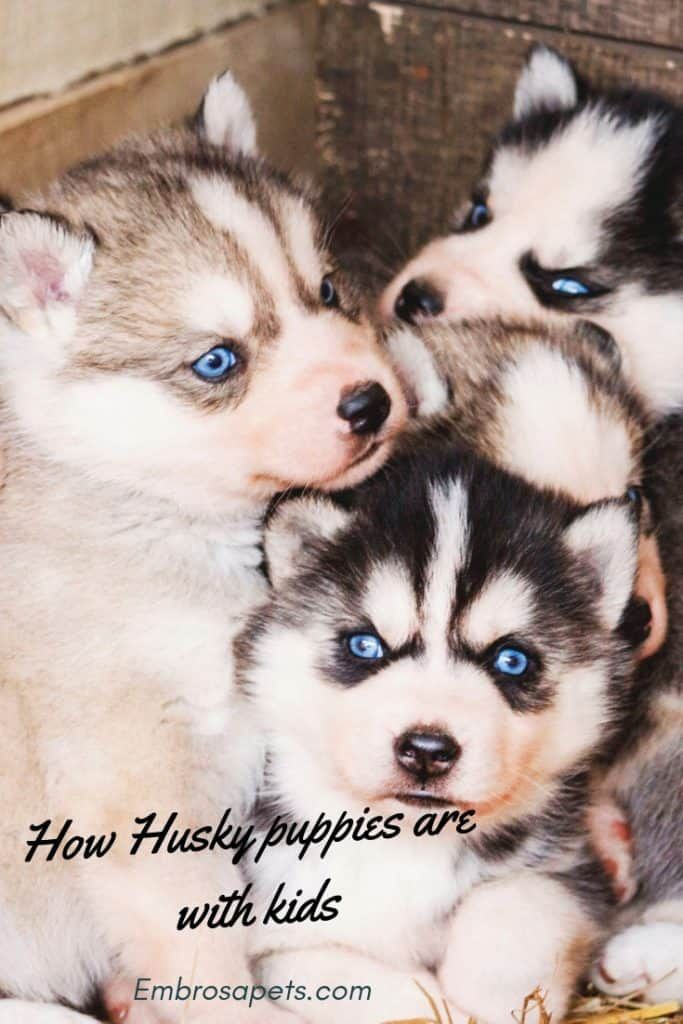 Are Husky Puppies Good With Kids Puppies Husky Puppy Pets