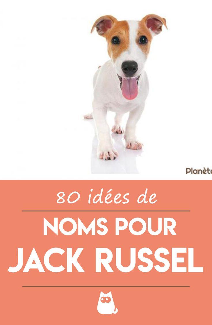 Noms Pour Jack Russell Terrier 80 Idees Nom De Chien Prenom Chien Nom De Chien Male