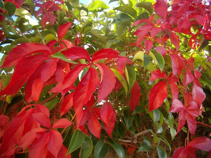 hojas otoño