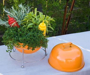 Image Detail For Dish Gardening And Miniature Landscaping Creative Container  Dish Herb .
