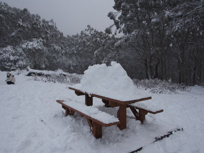 Mt Donna Buang in the Snow - Melbourne